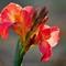 16-11-03 P1900777 Red flower