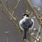 VogelsVoorjaar2016a_018
