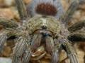 Scorpion for dinner