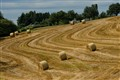 Bales and Lines