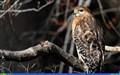 Desktop Hawk