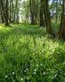 Wild Flower Wood