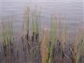 Putrajaya lake..