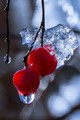 Berries and Ice