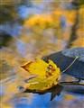 Leaf & Stream