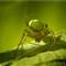 GreenSpider