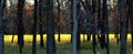 Illuminated Greenfield