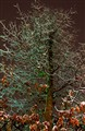 Ice Tree at Night
