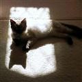 Me N My Shadow