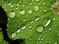 Drops drops