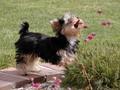 Puppy meets flower