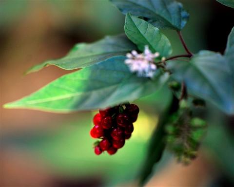 Bokeh Berries in Miami in the Winter