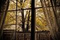 Through my windowpane