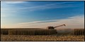 Corn_Harvest_in_the_Prairie_State-1419 copy