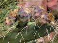 Desert Means Cactus