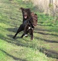 lady and marley running