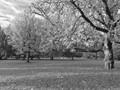 Fall in black&white
