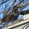 bird_crop