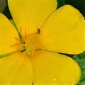 Ants and a Yellow Flower