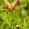 Butterflies_P6172078