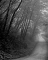 Coastal (foggy) drive