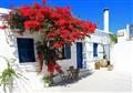 Bougainvillea on the Greek Isle of Parros
