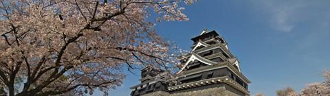 熊本城桜03pano