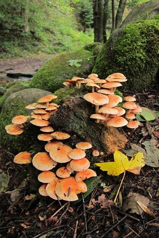 mushroomcreek