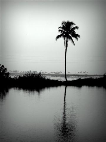 Tree_P1070101