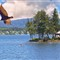 Eagle from deck devils lake summer 2012