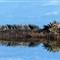 marine iguana 6054