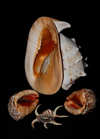 Shells from seas of Seychelles