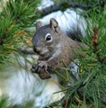 Squirrel with a Meal