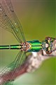 Dragonfly X