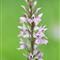 An Orchid Portait