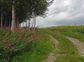 A summer road
