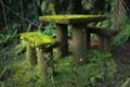 A mossy seat