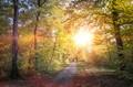 Path through a bright autumn forest.
