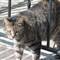 Neighborhood Homeless Cat