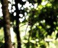 Spider...waiting to kill.