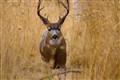 Deer in Beacon Hill Park