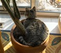 cat and the cactus