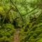 103_1080: Rennadinna Yew Wood, Killarney