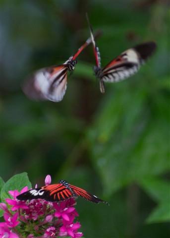 ButterfliesAtWar
