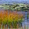 Warp and Woof of Reeds and Ripples