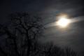 moon rise at the farm