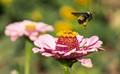 Bumble Bee and Beetle