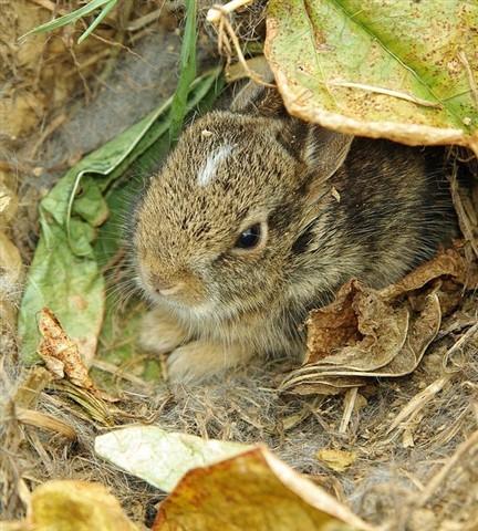 Bunny a 2