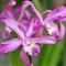 floral_31