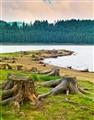 Roots peninsula